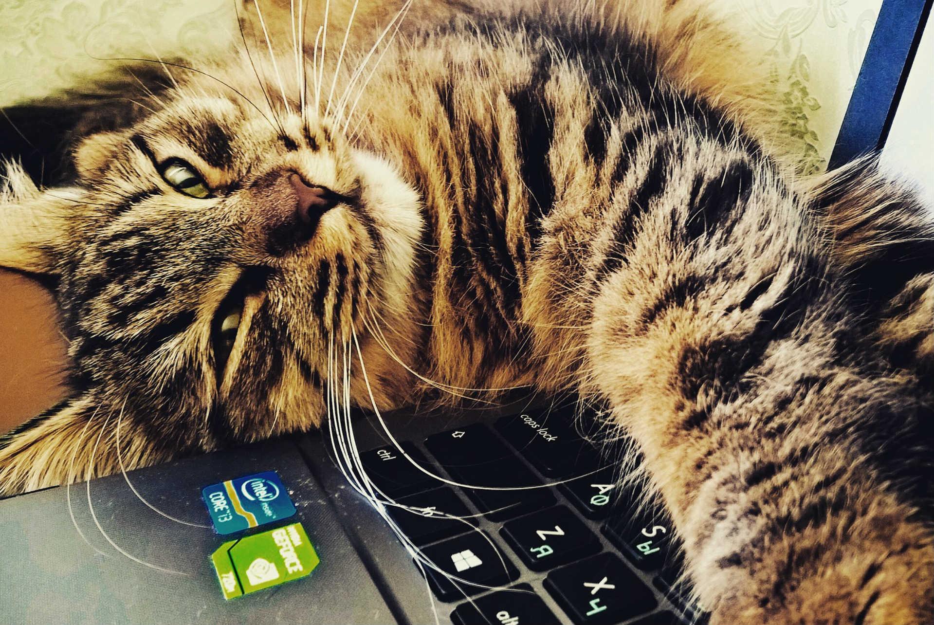 החתול של משעול מערכות מידע